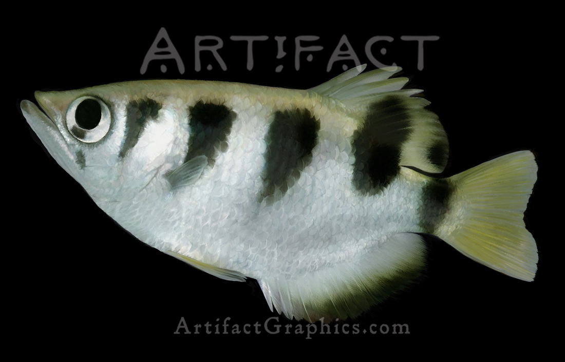 Archerfish by Michelle Leveille
