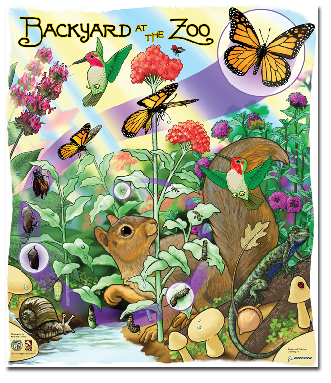 The life cycle of the Monarch butterfly, illustrated by Michelle Leveille for the 2nd-graders of Los Angeles.