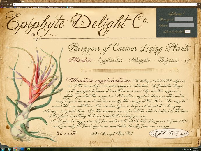 Epiphyte Delight Co. website created by Michelle Leveille