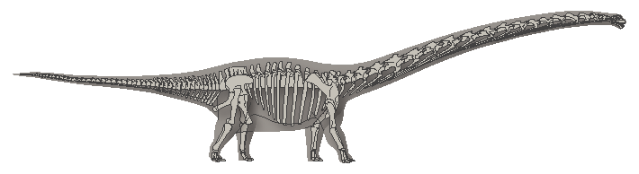 Mamenchisaurus, colored entirely gray to indicate that all of the bones are replicas, illustrated by Michelle Leveille for LACMNH
