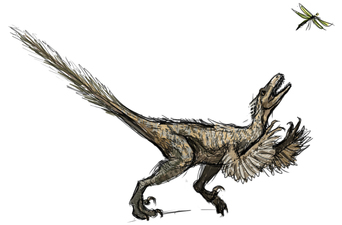 First velociraptor sketch, by Michelle Leveille