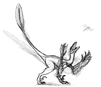 Second velociraptor sketch by Michelle Leveille